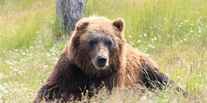 Bären-TV: Kamera-Lösungen für den besonderen Einsatz